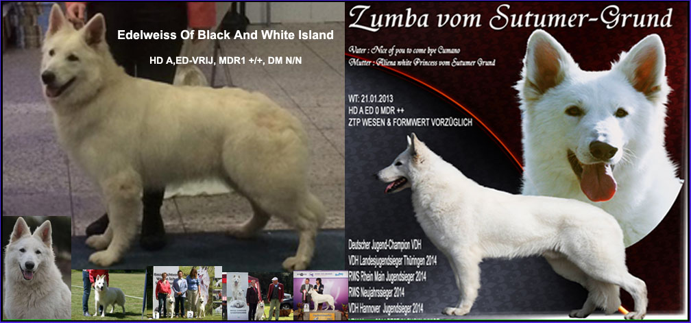 blacky_x_zumba